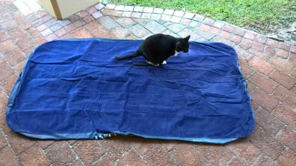 Cat Proof Air Mattresses Choose One Or Protect The One