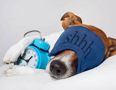 dog with sleep mask concept