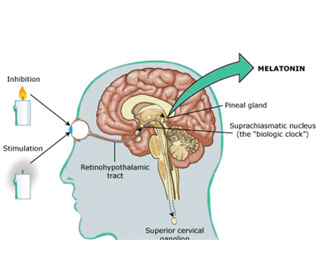 Natural Ways To Promote Melatonin Production The Sleep