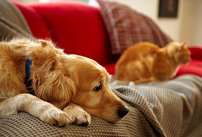 cat and dog on sofa