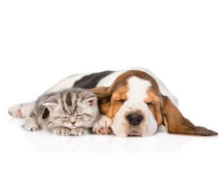 Melatonin and other calming aids for cats and dogs – top 5 picks from experts & their ratings