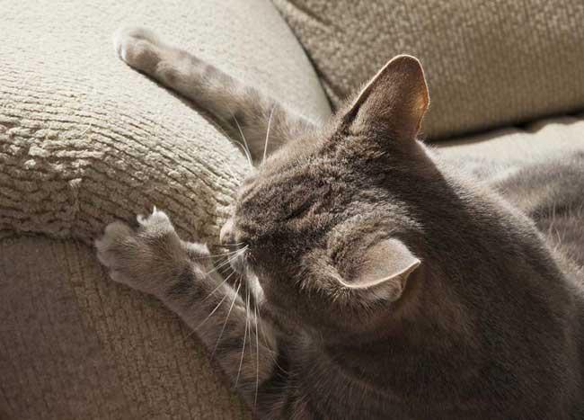 cat sctratching chennile sofa armrest
