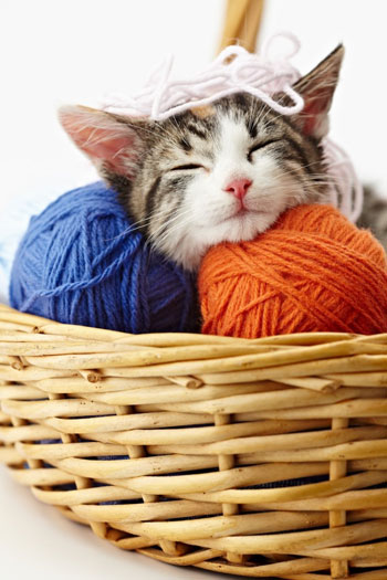 kitten sleeping relaxed in basket