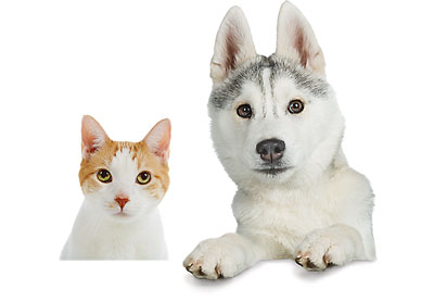 pets isolated white