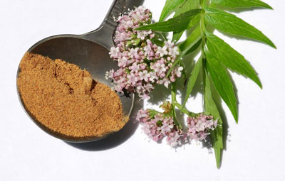 valerian plant and powder extract in bowl