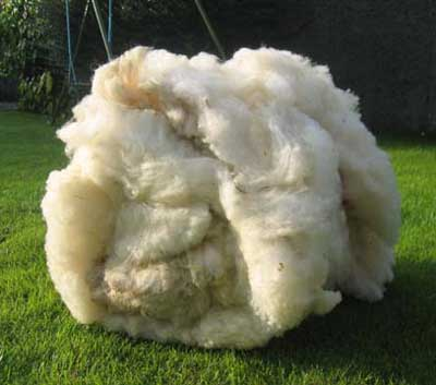 sheep wool lleyn